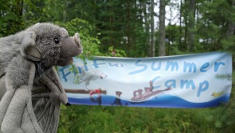FinFur Summer Camp 2013